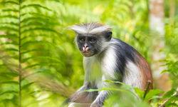 monkey in leaves