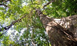 Manaus Amazon Forest