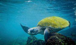 A Turtle Waving