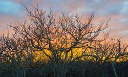 Twisted Tress at Sunset