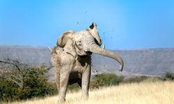 Elephant shaking mud
