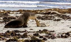 Sea lions next to the sea