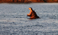Lower Zambezi National Park wildlife