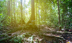 The rainforest floor