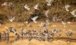 Birds flying in Kalahari