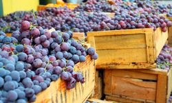 Wooden Trays of Grapes