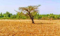 North Field Ethiopia
