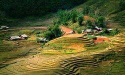 Mountain Fields in Sapa