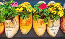Flowery clogs