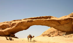Camel under archway in the desert