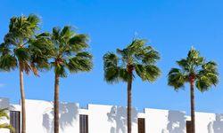 Tenerife palm trees