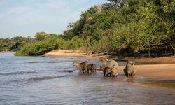 Capybara on the riverside