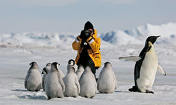Photographing penguin chicks in Antarctica