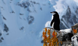 A penguin on a bluff in Antarctica