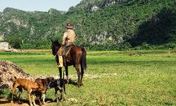 A Cuban gaucho