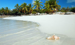 Conch shell on the beach