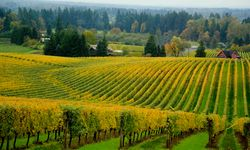 Willamette Valley, Oregon