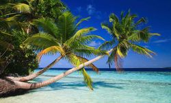 Palm trees in the Maldives
