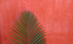 Pastel red wall with fern