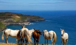 Horses in The Azores overlooking water