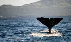 A whale tail in the water off The Azores
