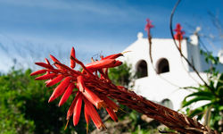 Red Flowers with a While Villa in the Background