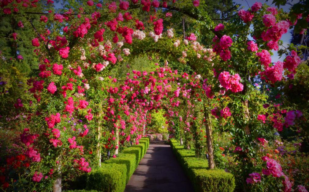 Butchart gardens british columbia original travel - What time does victoria gardens close ...