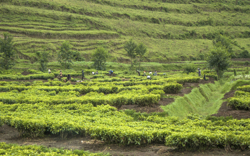 An in depth look at the east centerl african country of rwanda