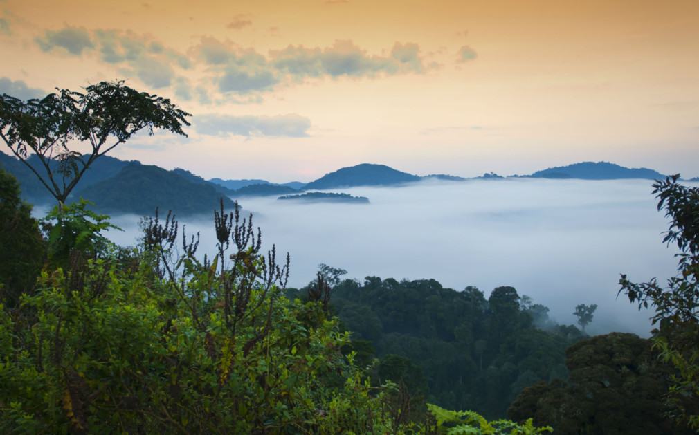 an in depth look at the east centerl african country of rwanda Which animals live in rainforests depends on which part of the world the rainforest  african rainforests are home to  creatures at that depth are drawn to.