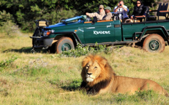 Lion sighting on game drive