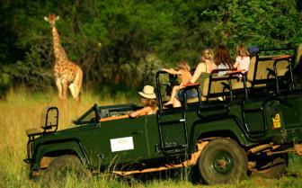 Game drive giraffe sighting