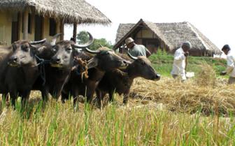 Animal at Vil Uyana