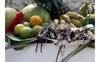 Lobster at White Sand Luxury Villas