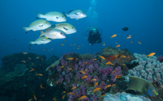 Diving at Rocktail Beach Camp, luxury hotel in South Africa