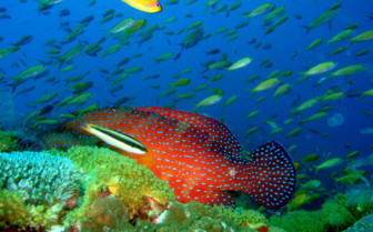 Picture of the underwater world at Fundu Lagoon, luxury hotel in Africa