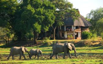 Elephants at Luangwa Safari House