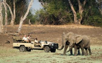 South Luangwa Safari