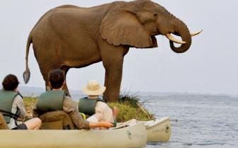 Canoe with Elephant