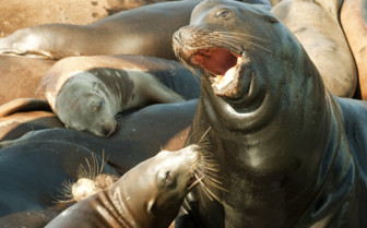 A Group of Seals