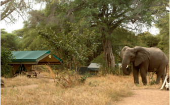 The wildlife exterior at the camp