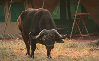 The wildlife exterior at Mdonya Old River Camp