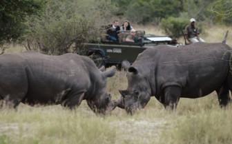 Game drive with rhino sighting