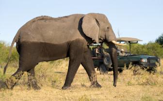 Elephant at Selinda Camp, luxury camp in Botswana