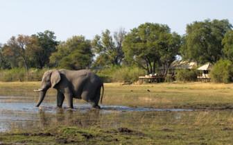 Elephant at Zafara Camp Exterior, luxury camp in Botswana