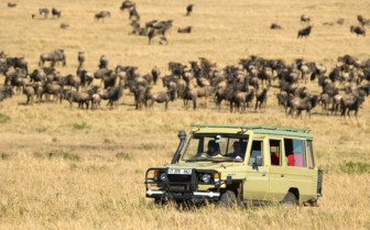 Safari tours through Tanzania's wilderness
