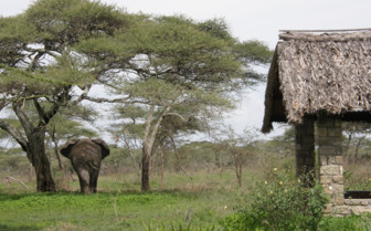 Elephant at the exterior of the Lodge