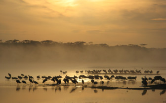Flamingos at sunset in the lodge area