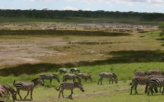 Wildlife close to Ndutu Safari Lodge, luxury lodge in Tanzania