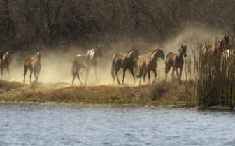 Horses at Horizon Horseback Safari Lodges, luxury safari camp in South Africa