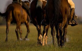Horses at the camp